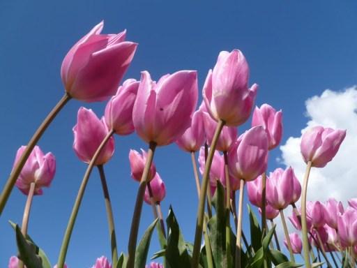 Summer Colors Week: Pink
