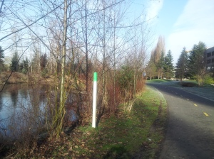 Along the Sammamish River trail