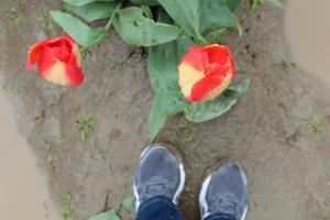 Tulip feet pic