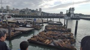 Seals on Pier 39