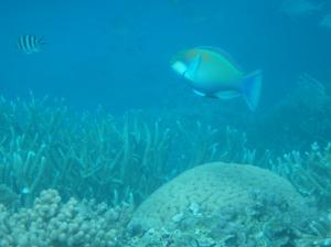 Fishy!!!