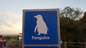 We're going to see the penguins!