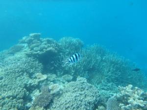 Fishy!!